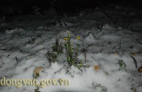 Tuyết rơi sớm ở Đồng Văn: Dày nhất trong vòng 10 năm - ảnh 10