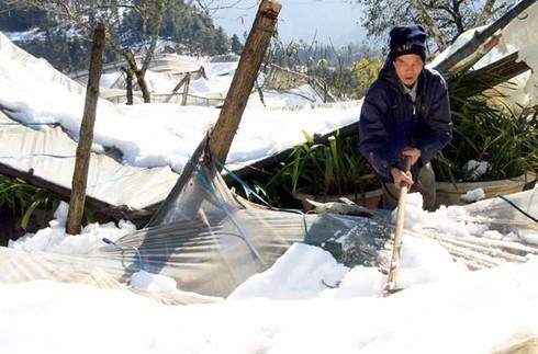 Xẻ thịt trâu chết rét vì mưa tuyết tại Sa Pa - ảnh 4