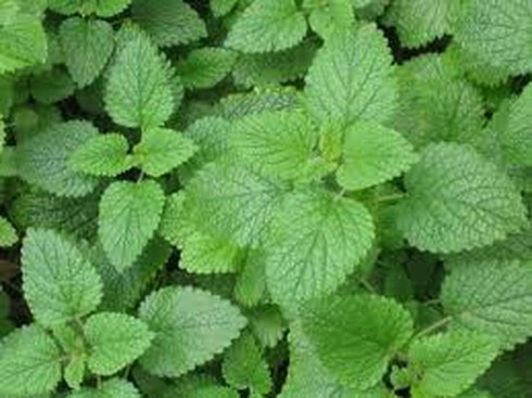 13 loại rau thơm có công dụng chữa bệnh - ảnh 5