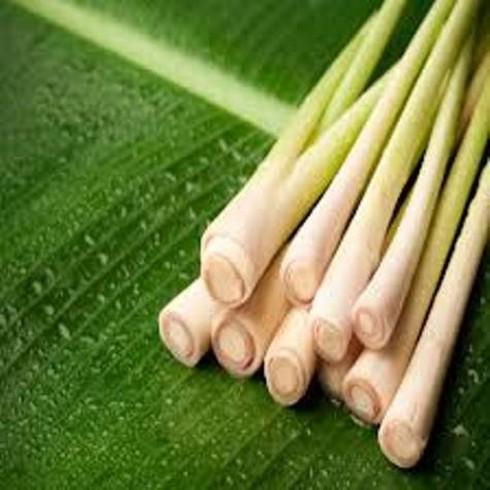 13 loại rau thơm có công dụng chữa bệnh - ảnh 6