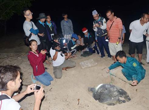 Rùa biển Côn Đảo bị săn bắt, xẻ thịt làm món nhậu