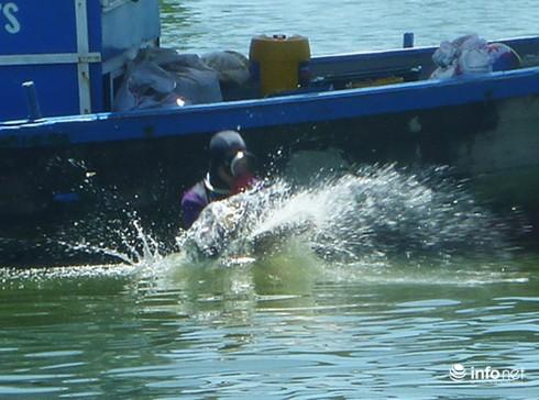 Ngư dân Đà Nẵng bỏ biển, đổ xô lặn chíp chíp: Có bàn tay thương lái Trung Quốc? - ảnh 2