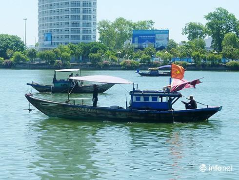 Ngư dân Đà Nẵng bỏ biển, đổ xô lặn chíp chíp: Có bàn tay thương lái Trung Quốc? - ảnh 3