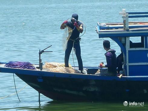 Ngư dân Đà Nẵng bỏ biển, đổ xô lặn chíp chíp: Có bàn tay thương lái Trung Quốc? - ảnh 1