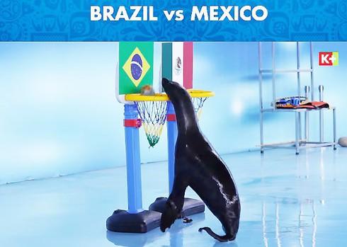 Trận Brazil vs Mexico: hải cẩu Molly dự đoán Brazil chiến thắng - ảnh 2