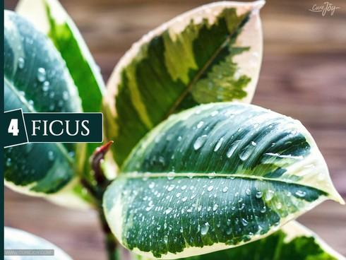 10 loại cây trồng trong nhà giúp cải thiện chất lượng không khí - ảnh 4