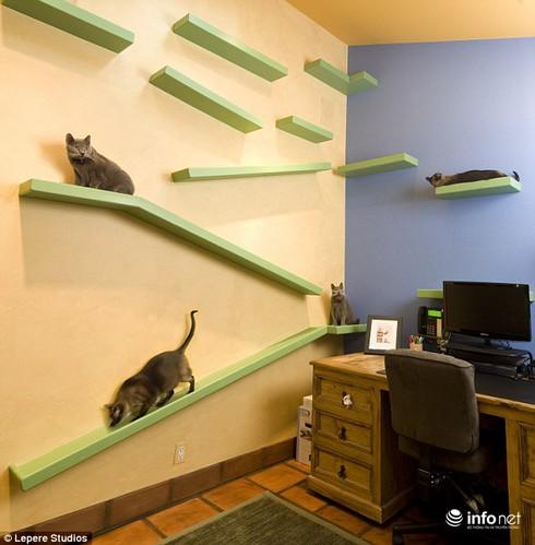 Mèo đại gia ở nhà tiền tỷ - ảnh 2