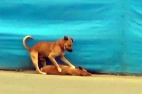 Chú chó tìm cách cứu bạn khiến cư dân mạng xúc động - ảnh 2
