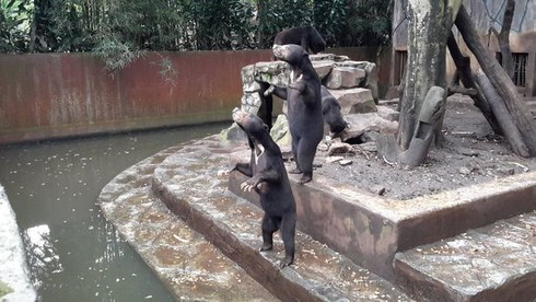 Hình ảnh gấu trong vườn thú gầy trơ xương gây bão - ảnh 2