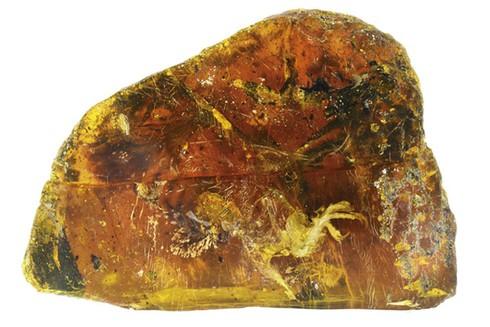 Chim hóa thạch còn nguyên móng, lông trong miếng hổ phách gần 100 triệu năm - ảnh 1