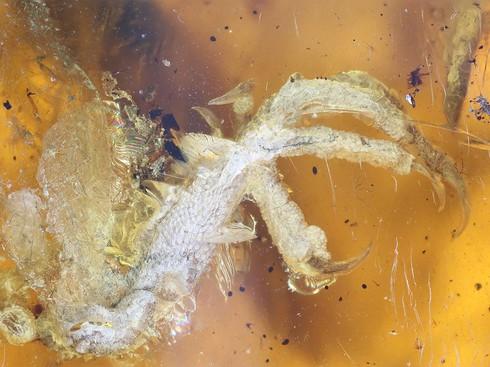 Chim hóa thạch còn nguyên móng, lông trong miếng hổ phách gần 100 triệu năm - ảnh 2