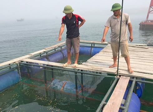 Shop TIN 21/4:Cá biển bị đầu độc từ Vũng Áng???- Khởi tố vì