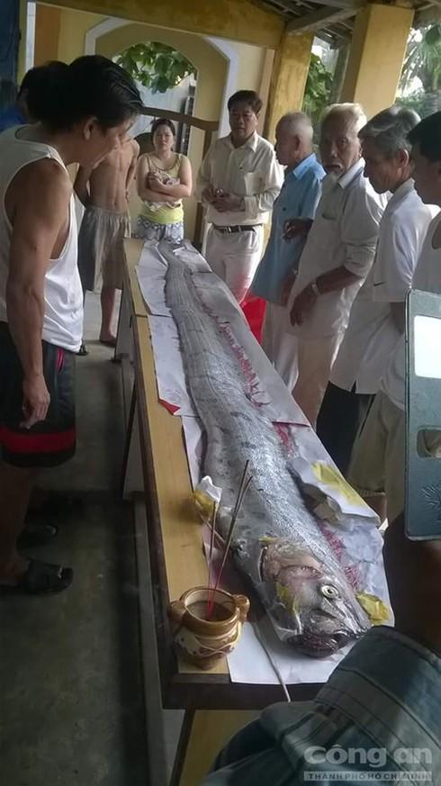 Phát hiện cá hố 'khủng' trôi trên biển ở Đà Nẵng - ảnh 1