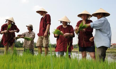 Báo Mỹ: Vì sao lúa gạo Việt Nam