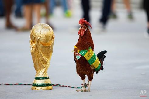 20 bức ảnh báo chí tuyệt đẹp về World Cup những ngày qua - ảnh 19
