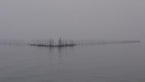 Xót xa cảnh tận diệt nguồn lợi thuỷ sản tại Quảng Ninh - ảnh 2