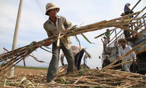 Cộng đồng kinh tế ASEAN: Đã đến lúc Việt Nam chấm dứt bảo hộ - ảnh 1