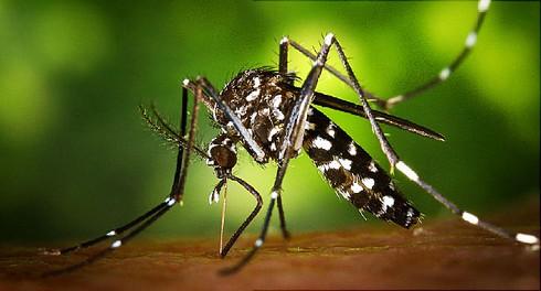 Hai trường hợp mắc Zika ở TP.HCM và Bình Dương - ảnh 1