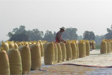 Trung Quốc đột nhiên tăng mạnh mua gạo từ Việt Nam