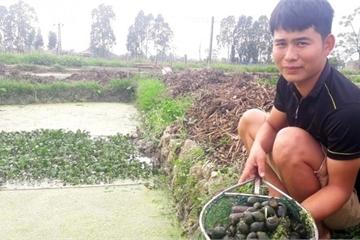 Chàng thanh niên bỏ bệnh viện về quê nuôi ốc nhồi thu lãi hàng trăm triệu đồng