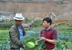 Người đàn ông bỏ công việc nhà nước về trồng rau trái vụ ở Mù Cang Chải thu tiền tỷ