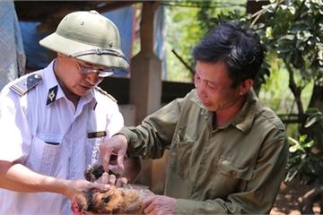 Lào Cai: Tiêm vắc xin cúm gia cầm mới đạt 48%