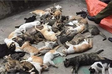 Công an đang truy tìm thủ phạm vụ mèo chết hàng loạt ở Nam Định sau Tết