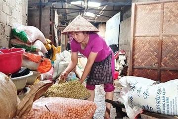 Hàng tấn nông sản mọc mầm trắng xóa sau lũ, tiểu thương chợ Vinh khóc ròng