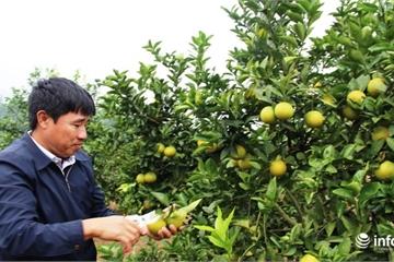 Nghệ An: Huyện Thanh Chương phấn đấu có 20 xã về đích nông thôn mới