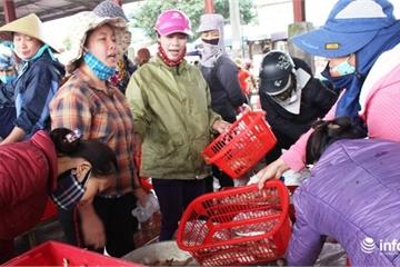 Nghệ An: Cảng cá Lạch Vạn đông đúc, nhiều người thờ ơ với khẩu trang phòng dịch
