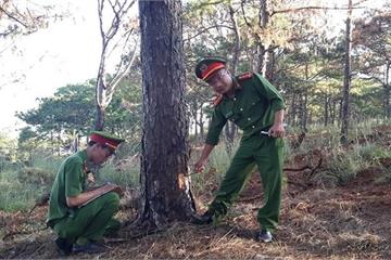 Đắk Nông: Bắt nhóm đối tượng đầu độc hơn 1.000 cây thông để chiếm đất