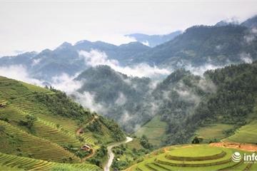 Chiêm ngưỡng đồi mâm xôi đẹp nổi tiếng trong mùa vàng ở Mù Cang Chải