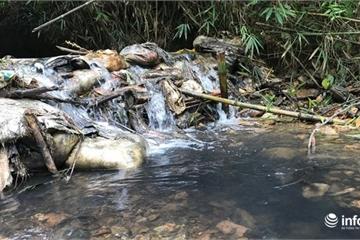 Cận cảnh dầu thải tại suối đầu nguồn cung cấp nước cho Nhà máy nước sông Đà