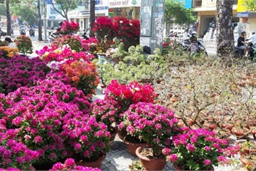 TPHCM: Rực rỡ các chợ hoa tết
