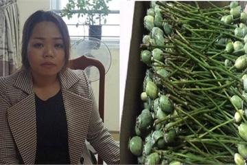 Hà Tĩnh: Nữ 9X tàng trữ 12kg quả thuốc phiện tươi bị bắt giữ