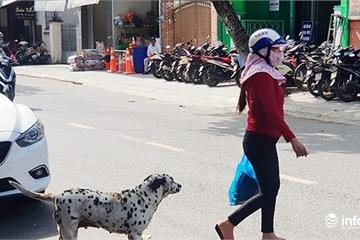 Đà Nẵng: Lịch tiêm phòng bệnh Dại cho động vật nuôi tại các quận, huyện