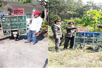 Từ Quảng Nam ra Đà Nẵng bán chim hoang dã, bị phạt 5 triệu đồng