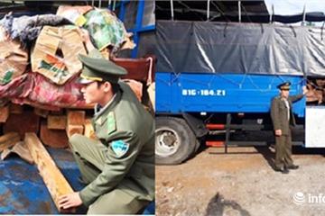Đà Nẵng: Phạt tài xế 40 triệu đồng, tịch thu 1,3m3 gỗ Re hương quý hiếm