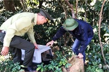 Đà Nẵng: Bắt được 2 con khỉ quý hiếm quấy phá Ngũ Hành Sơn