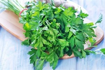 Lợi ích tuyệt vời của rau mùi tây đối với sức khỏe