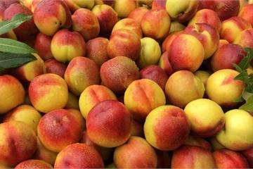 Những trái cây tốt cho sức khỏe và hệ miễn dịch giữa mùa dịch