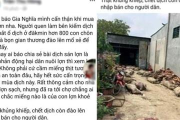 Đắk Nông:Phạt 10 triệu đồng chủ tài khoản FB tung tin sai về lợn dịch chết