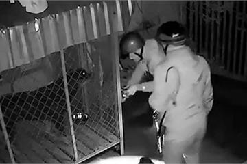 Bị camera an ninh ghi hình, trộm chó nhờ người trả lại 2 con chó quý gần 1 tạ