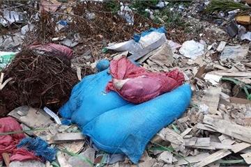 Đắk Lắk: Phát hiện đàn lợn chết nghi nhiễm dịch tả lợn châu Phi, bị vứt lại bên đường