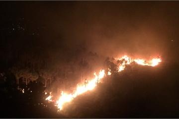 Lâm Đồng: Đã dập tắt hoàn toàn đám cháy trên núi Đại Bình, TP. Bảo Lộc