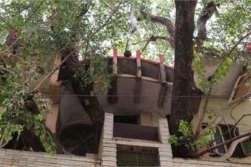 Ngôi nhà kỳ lạ xây xung quanh cây khổng lồ trăm tuổi