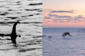 Đã ghi được hình ảnh quái vật hồ Loch Ness trong huyền thoại nhờ đàn chim sáo biển