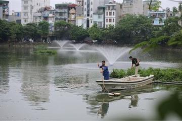 Cá chết tại hồ Văn Chương là do thay đổi thời tiết