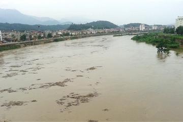 Củi từ Trung Quốc trôi dạt sang nhiều trên sông Hồng đoạn qua TP Lào Cai