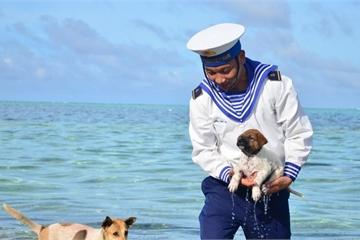 """Xúc động bài thơ """"Bơi vào đi"""" về những chú chó canh giữ biển trời ở Trường Sa"""